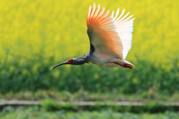 title='陕西观音山国家级自然保护区'