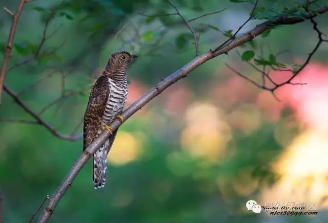 鸟类摄影 — 郝夏宁