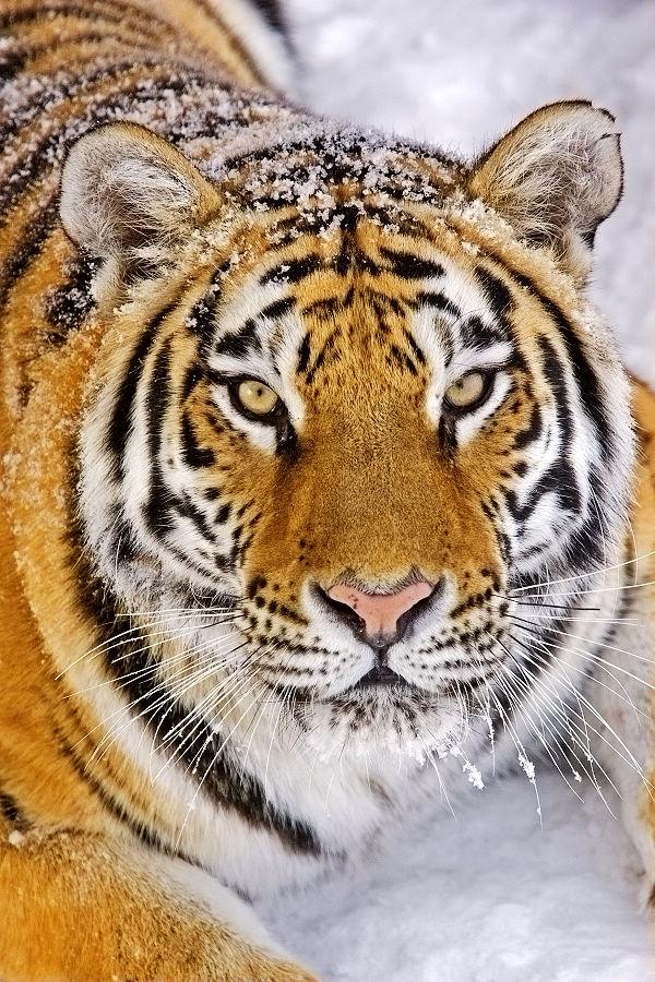 中国濒危野生动物保护